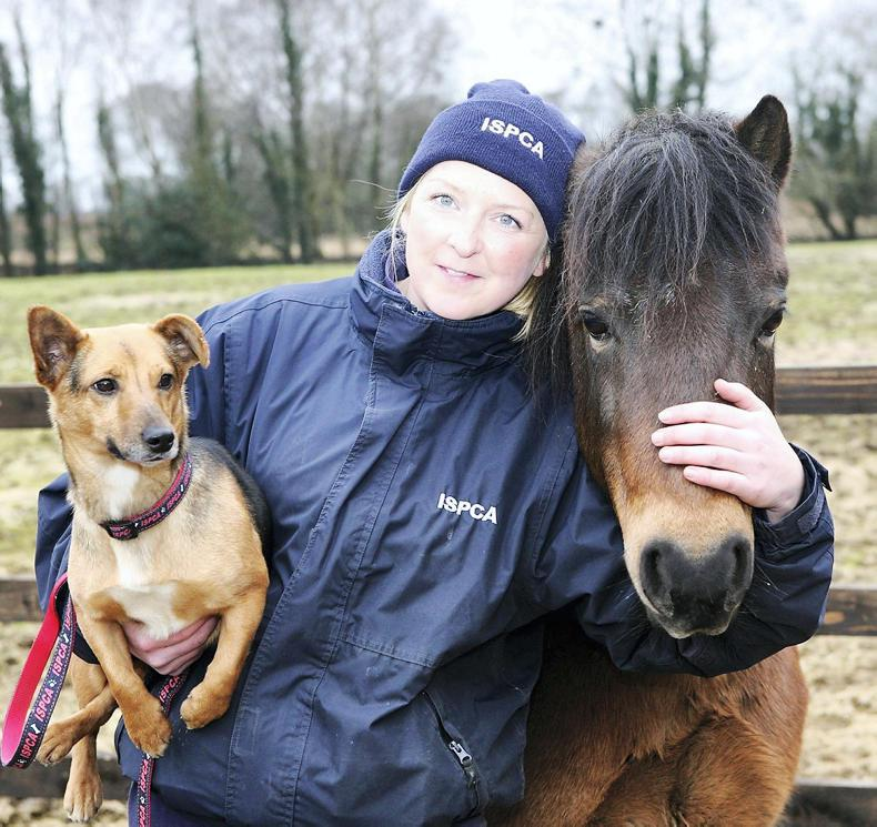 WEST OF THE SHANNON - Karen Lyons: All creatures great and small
