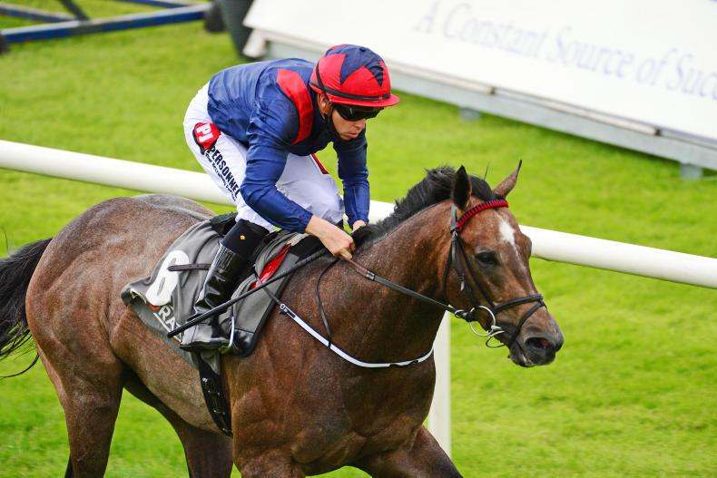 Steel Bull creates strong impression in Molecomb victory