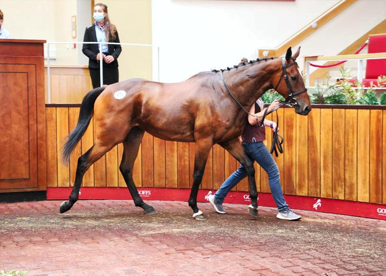 SALES: Million In Mind dispersal's Grand Roi tops trade at £400,000