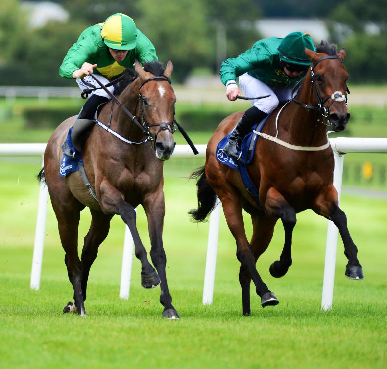 NAAS MONDAY: Miss Amulet struts her stuff for Condon