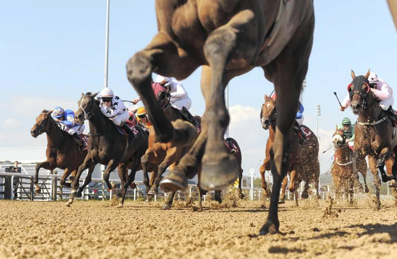 FARRIERY: Important basic tips in viewing a horse's gait and conformation