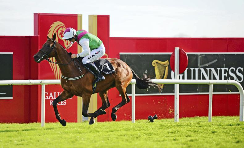 BREEDING INSIGHTS: Kelly's heroes as Aramon and Steel Bull deliver
