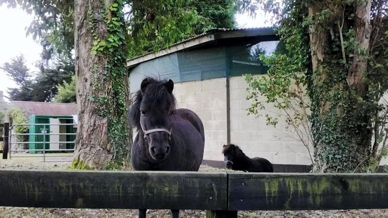 PONY TALES: Get golfing for horses and ponies in need