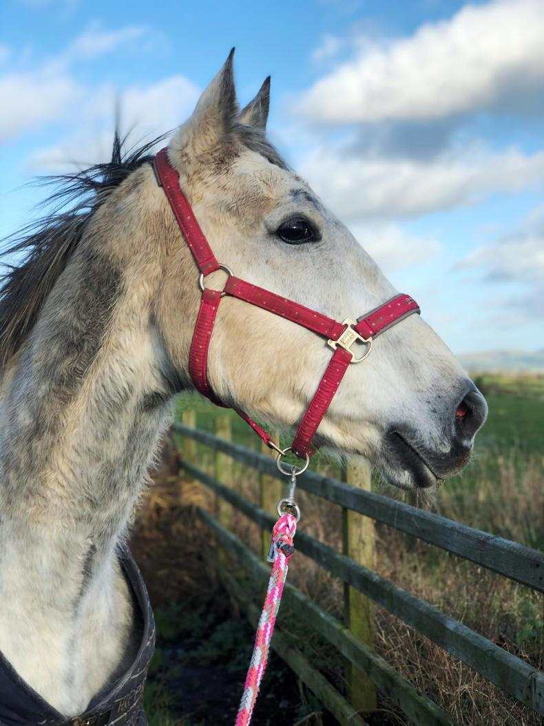 PARROT MOUTH: Get into the swing for rescue horses