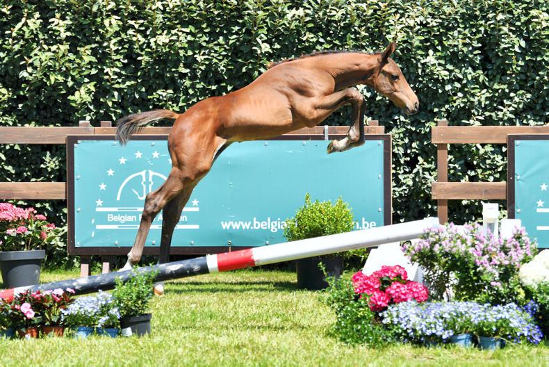 SALES: Figures prove it: Belgian Foal Auction, the auction with references