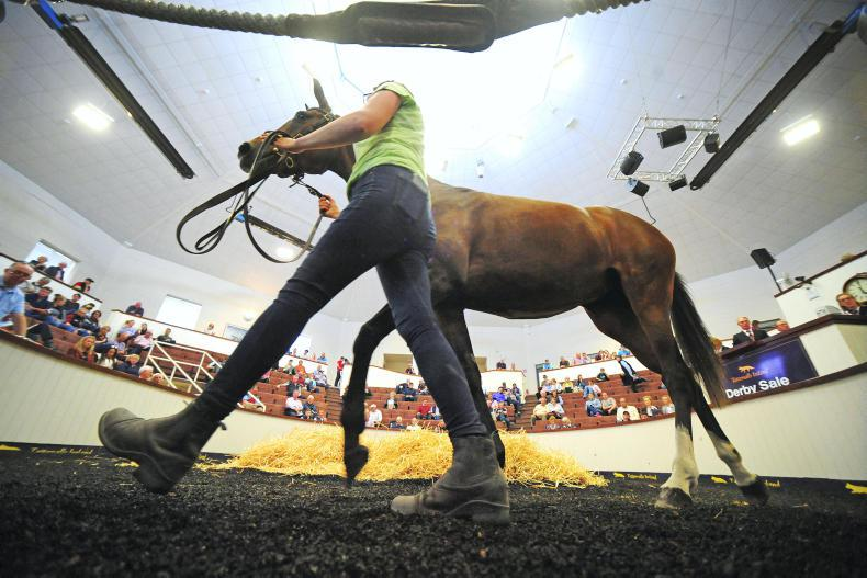 SALES: All set for three-day stores sale at Fairyhouse