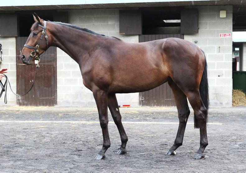 SALES: Network gelding has all the right connections