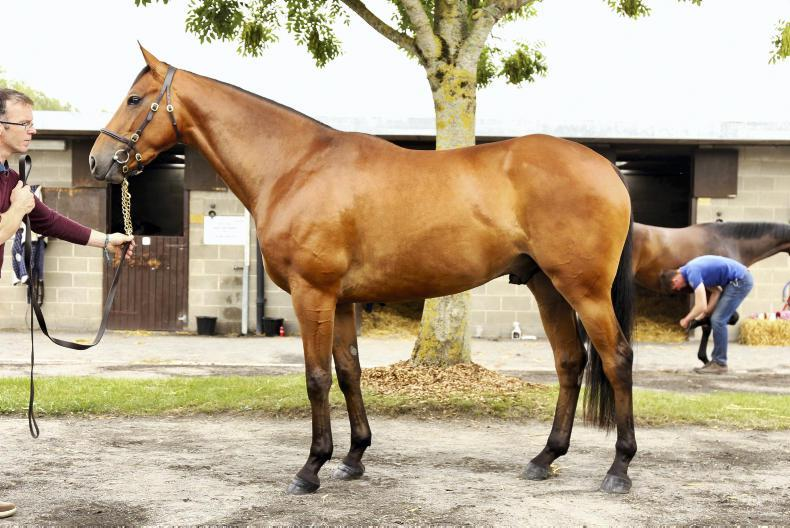 SALES: Demand for quality stores shines through at Goffs