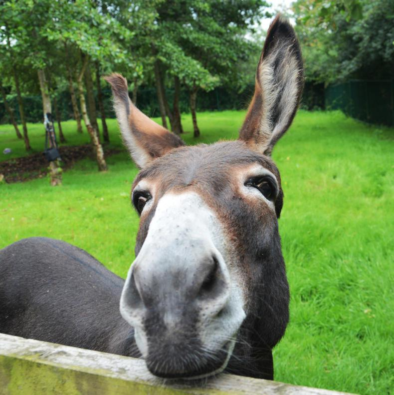 HORSE SENSE: How donkeys differ – not small horses with big ears