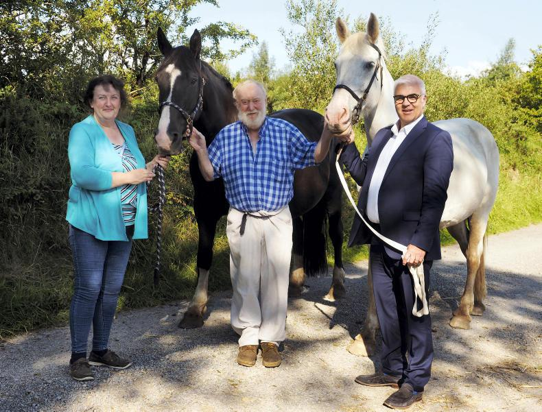 AROUND THE COUNTRY: Devenish establishes Irish Draughts heritage herd