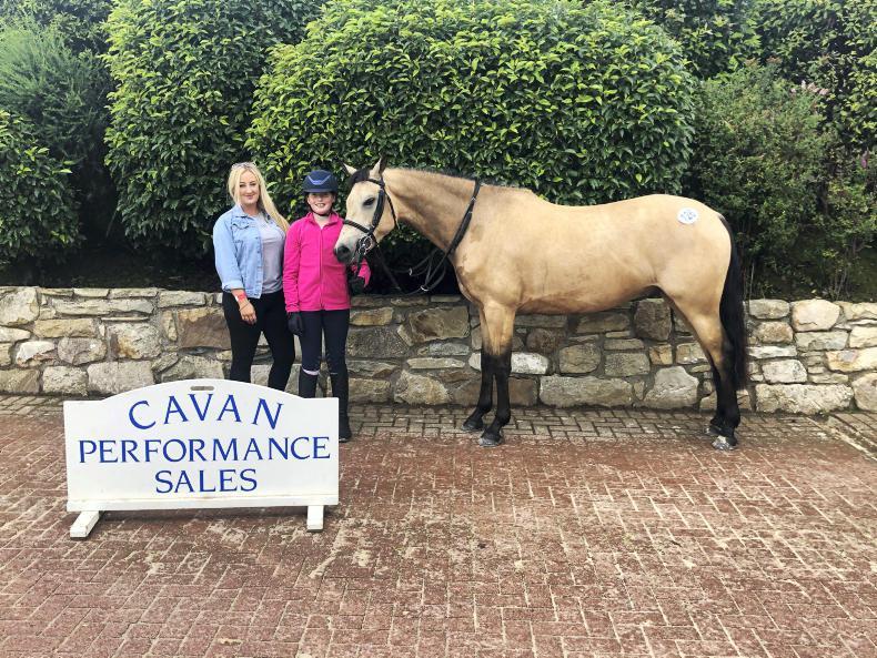 CAVAN SALES: Pony tops performance sale at €8,200