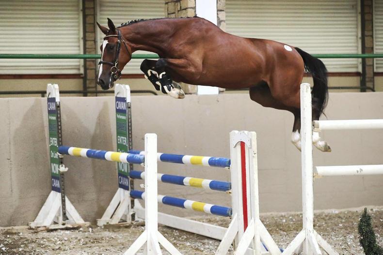 CAVAN SALES: Aganix gelding tops Cavan elite sale at €38,000