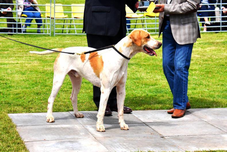PONY TALES: €50,000 raised via virtual hound show