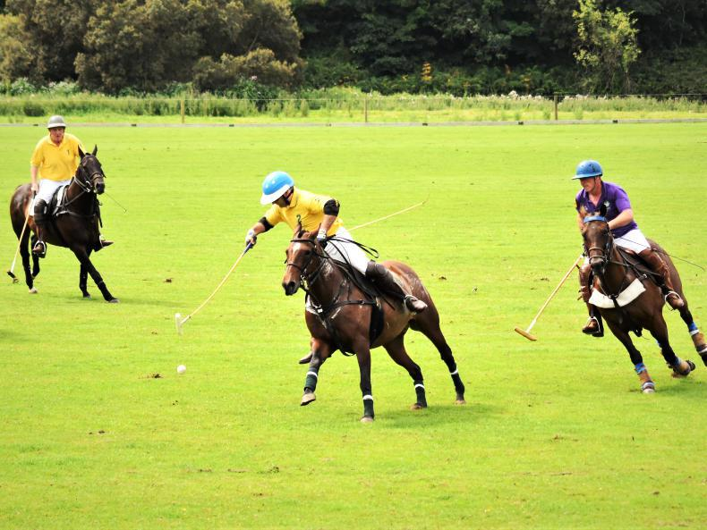 POLO: Barracudas bite down on Bunclody for Wexford Cup