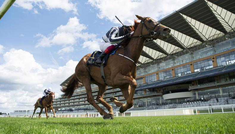 Irish Champion Stakes in the reckoning for Alpine Star