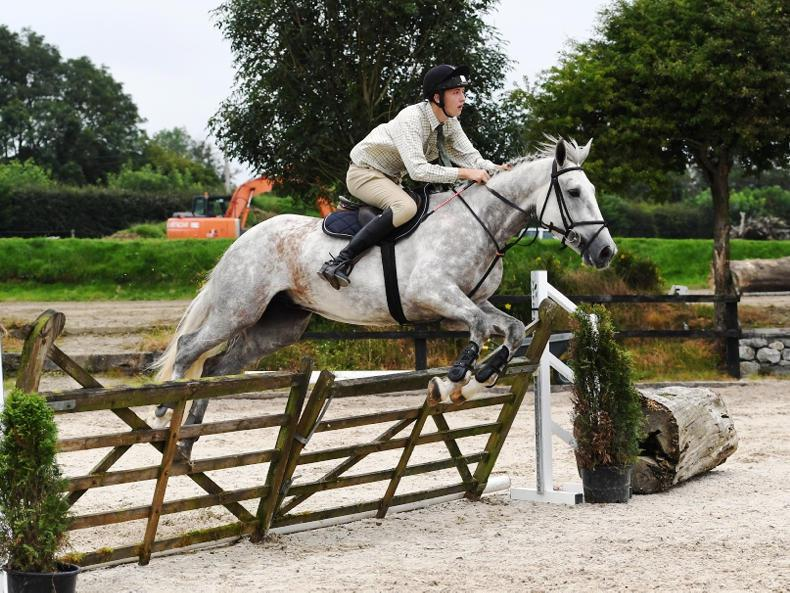 MULLINGAR SALES PREVIEW: Quality Irish hunters and eventers offered
