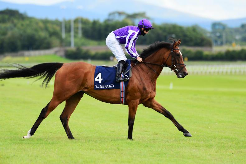 O'Brien looking forward to Magical in Irish Champion Stakes