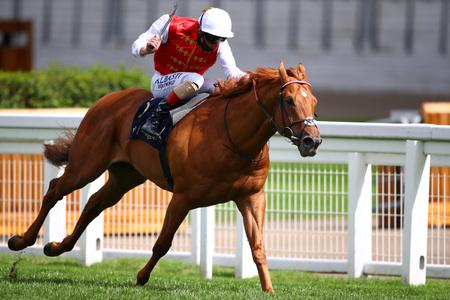 Golden Horde will head back to Ascot next