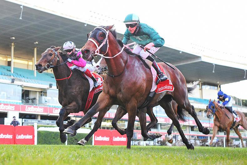 AUSTRALIA: Humidor heading for another Cox Plate