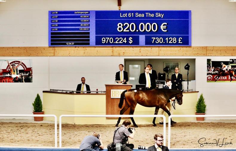 BBAG YEARLING SALE: Sea The Moon's own-sister equals sale record