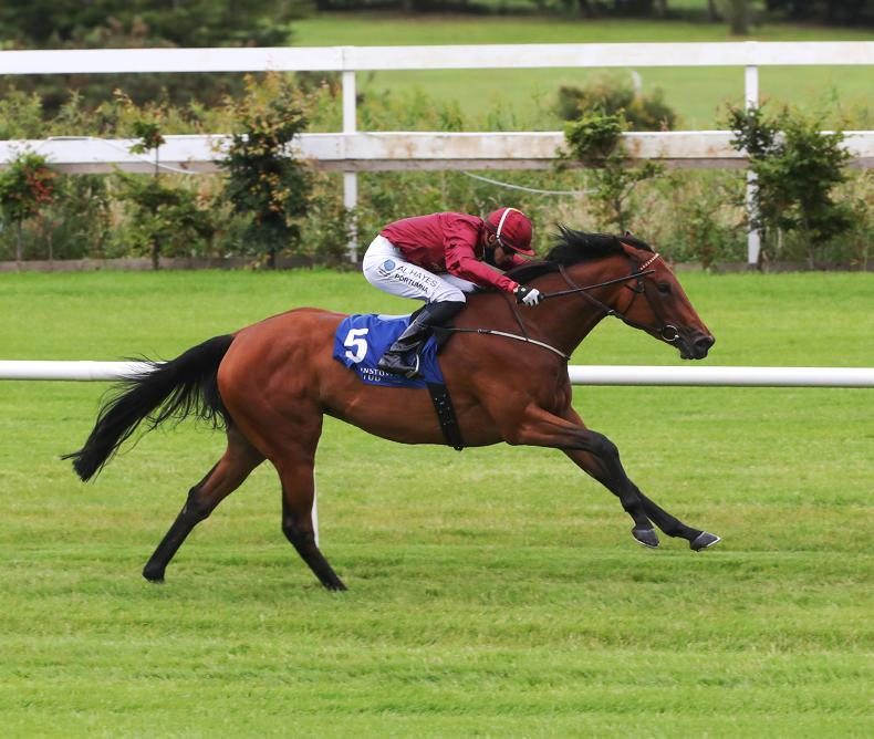 MATRON STAKES: Know It All can crown excellent season for Murtagh