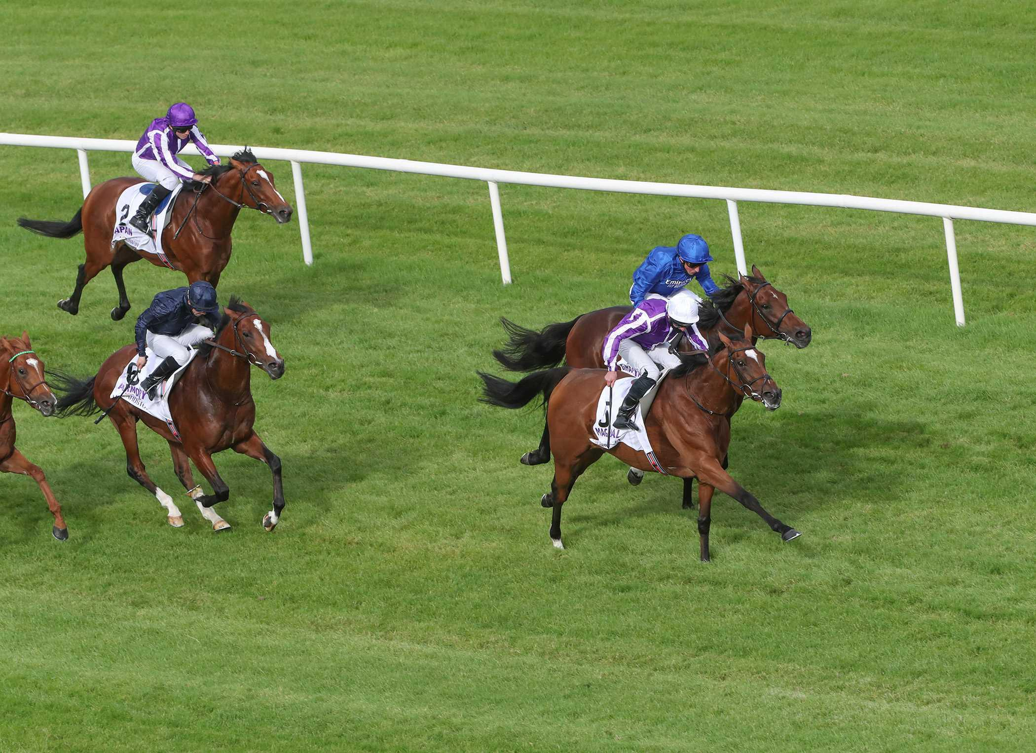 LEOPARDSTOWN SATURDAY: It's a Magical day again at Leopardstown
