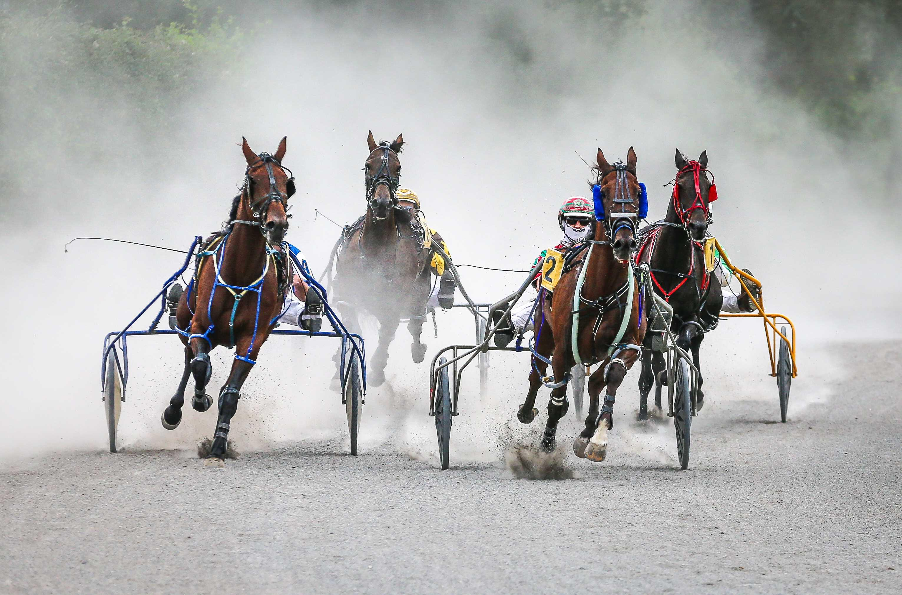HARNESS RACING: Rock rolls on taming the Dragon