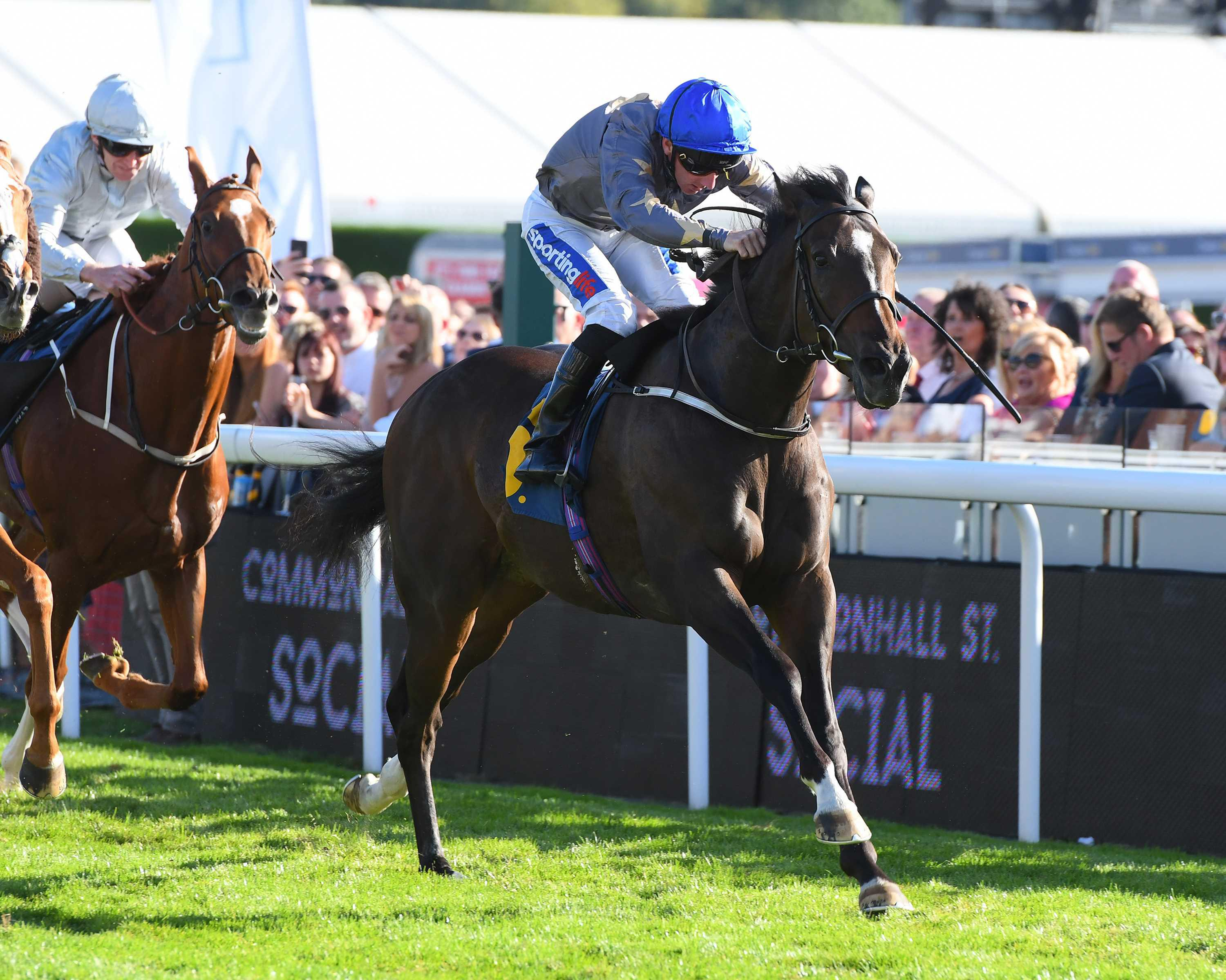 BRITISH PREVIEW: Wire can cause a shock In Ayr Gold Cup