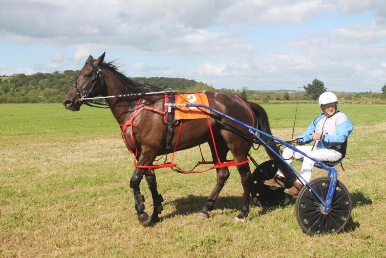 HARNESS RACING: Rapturous reception for 'elder statesman' Boyle