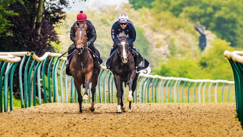 INDUSTRY SURVEY: How can racing attract and keep workers?