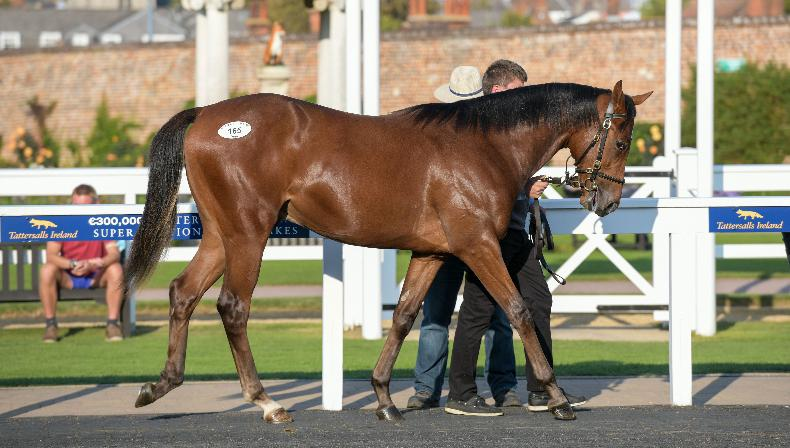 TATTERSALLS IRELAND SEPTEMBER YEARLING SALE: Manning's delight at record sale
