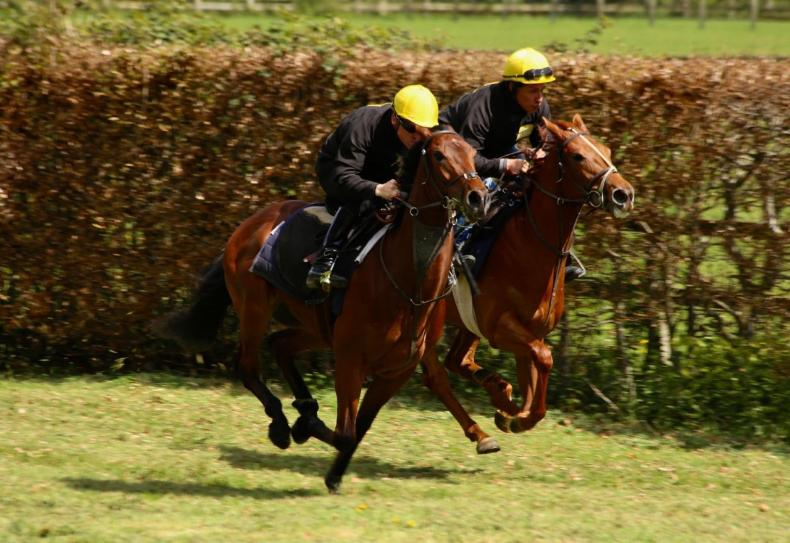 VIDEO: 'Stride length, speed, velocity, this is like Fitbit for horses'