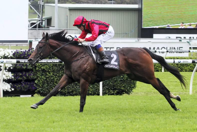 AUSTRALIA: Hallowed Crown has the winning attitude