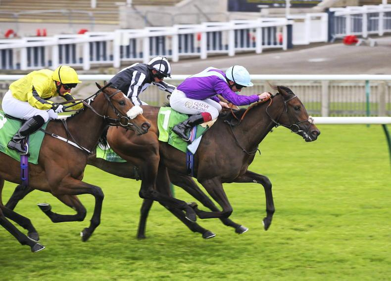 BRITAIN: Guineas next for Alcohol Free