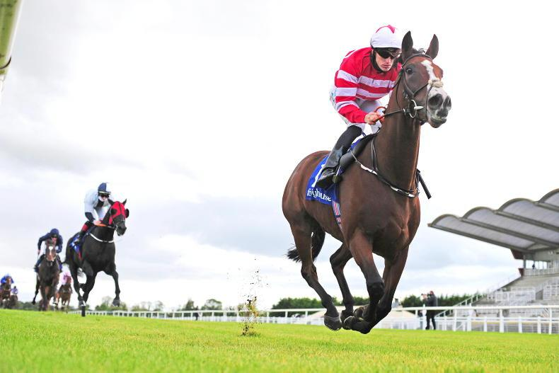 FAIRYHOUSE THURSDAY: High-class Militant set for a thrilling campaign