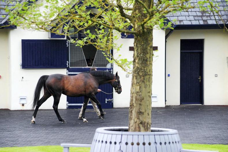PARROT MOUTH: Coolmore\Ballydoyle tour raises welfare funds