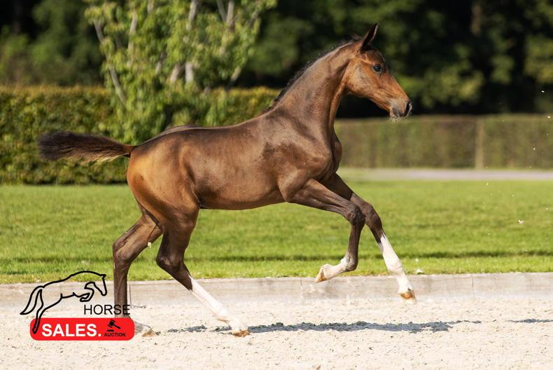 SALES: High-quality foals and embryos on offer at HorseSales.Auction