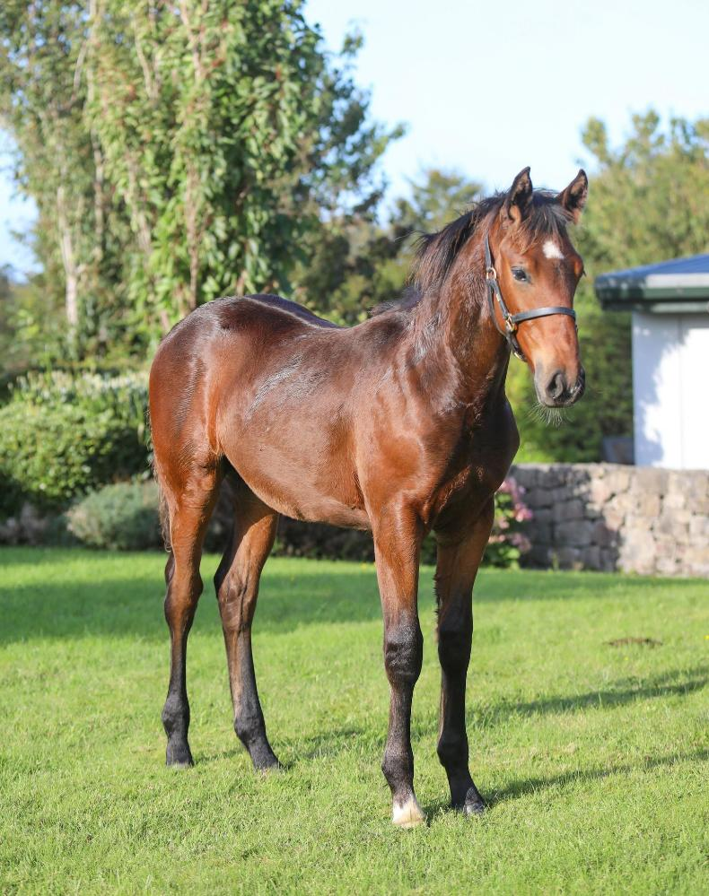 ADVERTORIAL: A foal sale for the breeder by the breeder