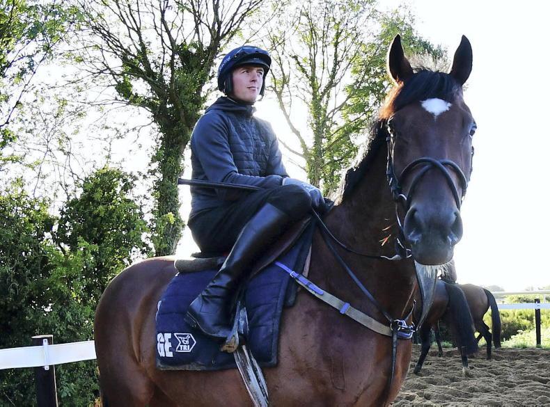 Elliott considering Down Royal return for National hero Tiger Roll