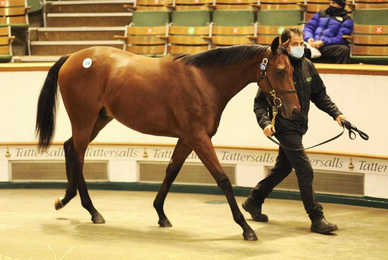 SALES: Four yearlings fetch seven figures at Newmarket