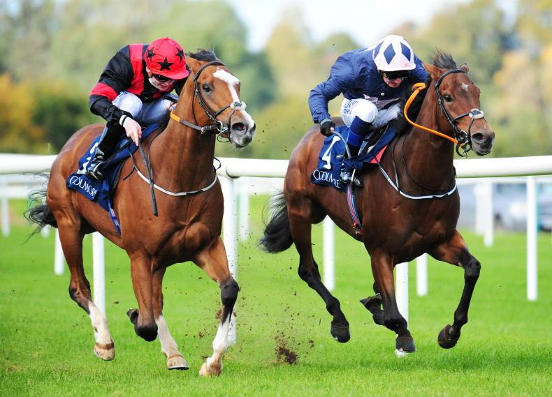 TIPPERARY SATURDAY: New high for Current Option