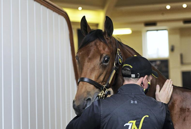 SALES: Coolmore pays over six million for two Galileo fillies