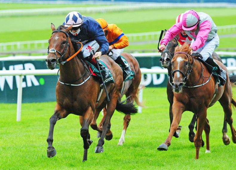 LIMERICK SATURDAY PREVIEW: Consistent Story can catch a break