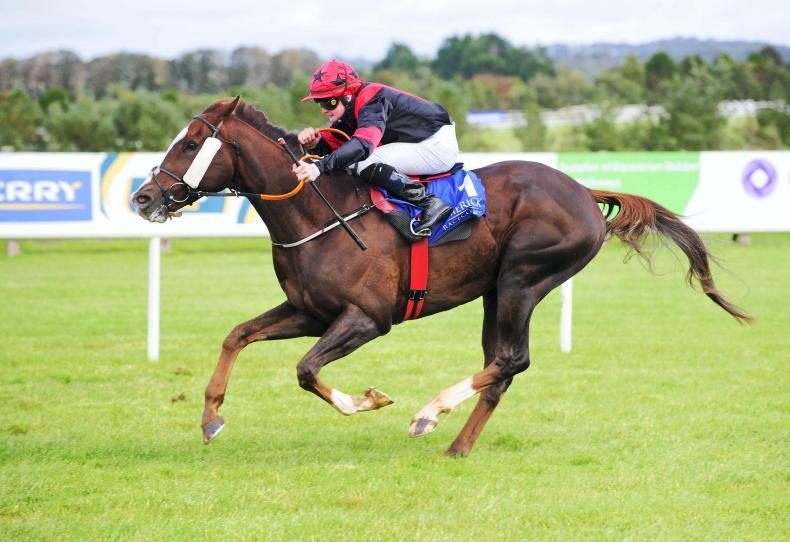 LIMERICK SATURDAY: 'Dream Horse' Saltonstall obliges again