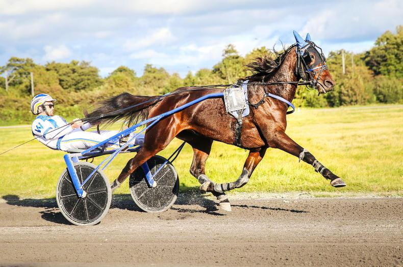 HARNESS RACING: Eva and Curly looks sharp in All-Ireland Trot