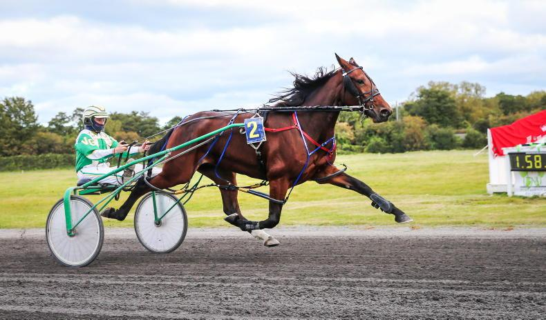 HARNESS RACING: Gill steals the show
