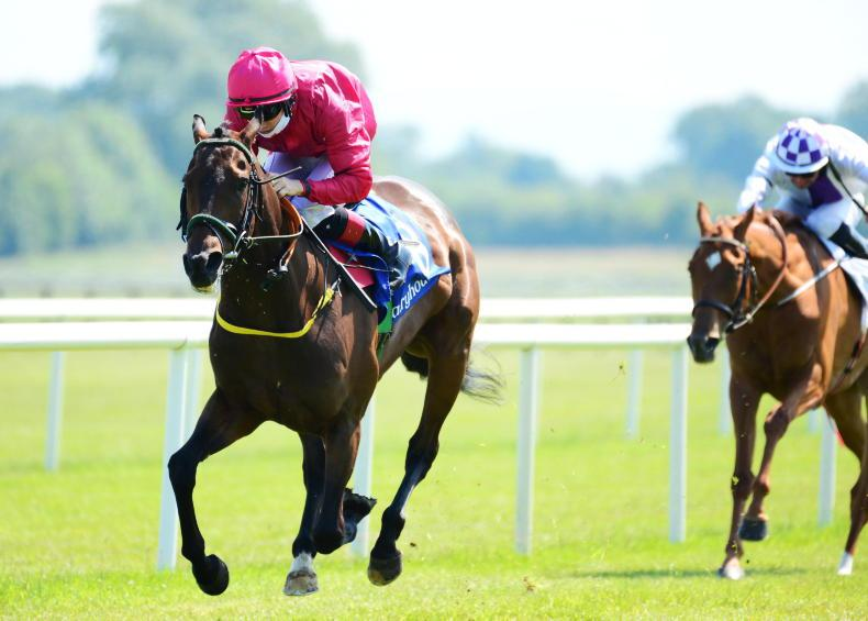 LEOPARDSTOWN SATURDAY PREVIEW: Take Ted to power home in October Handicap