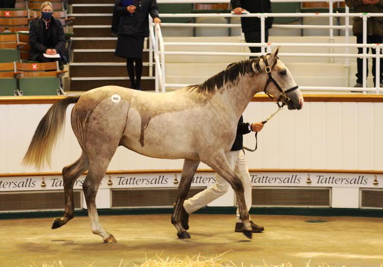 TATTERSALLS OCTOBER YEARLING SALE BOOK 2: Stunning outcome as sale defies odds