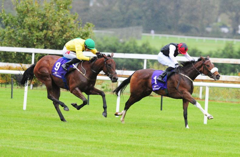 LEOPARDSTOWN SATURDAY PREVIEW: Amma can excel for Weld back at Leopardstown
