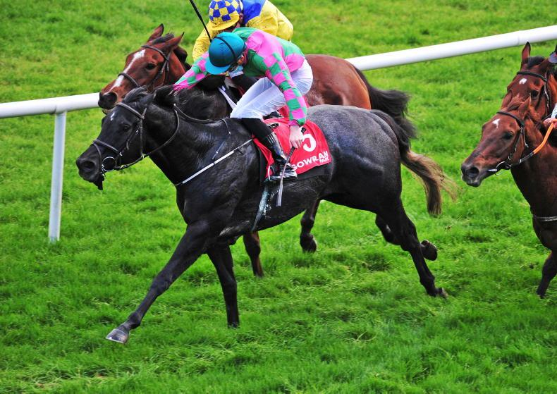 GOWRAN PARK WEDNESDAY: Mulvany already taking the Lincoln line with Comfort